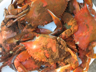 Chesapeake Bay steamed crabs