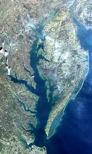 Chesapeake bay watershed chesapeake bay news for Tidal fish chesapeake