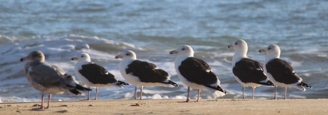 sea gulls on beach