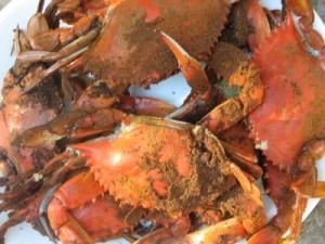 Chesapeake Bay steamed crabs