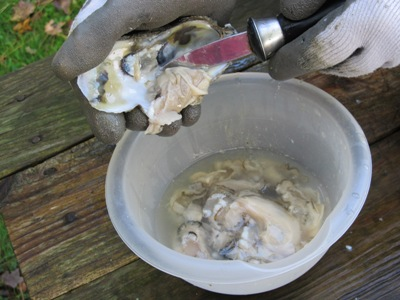 How to shuck an oysters